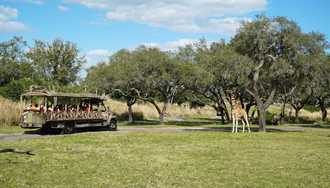 Operating hours of various Animal Kingdom attractions being reduced
