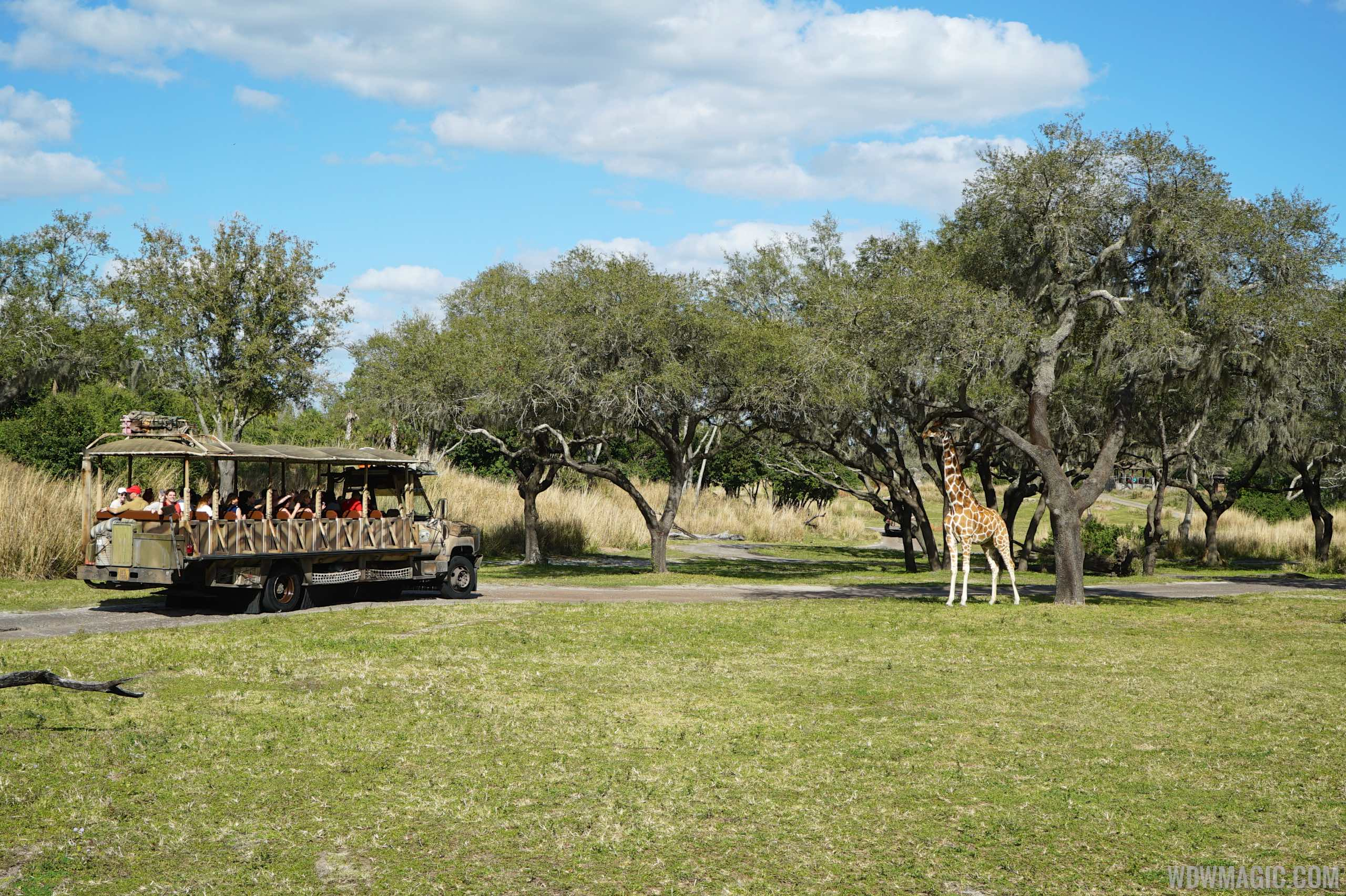 Travel through an African Savannah at Disney's Animal Kingdom