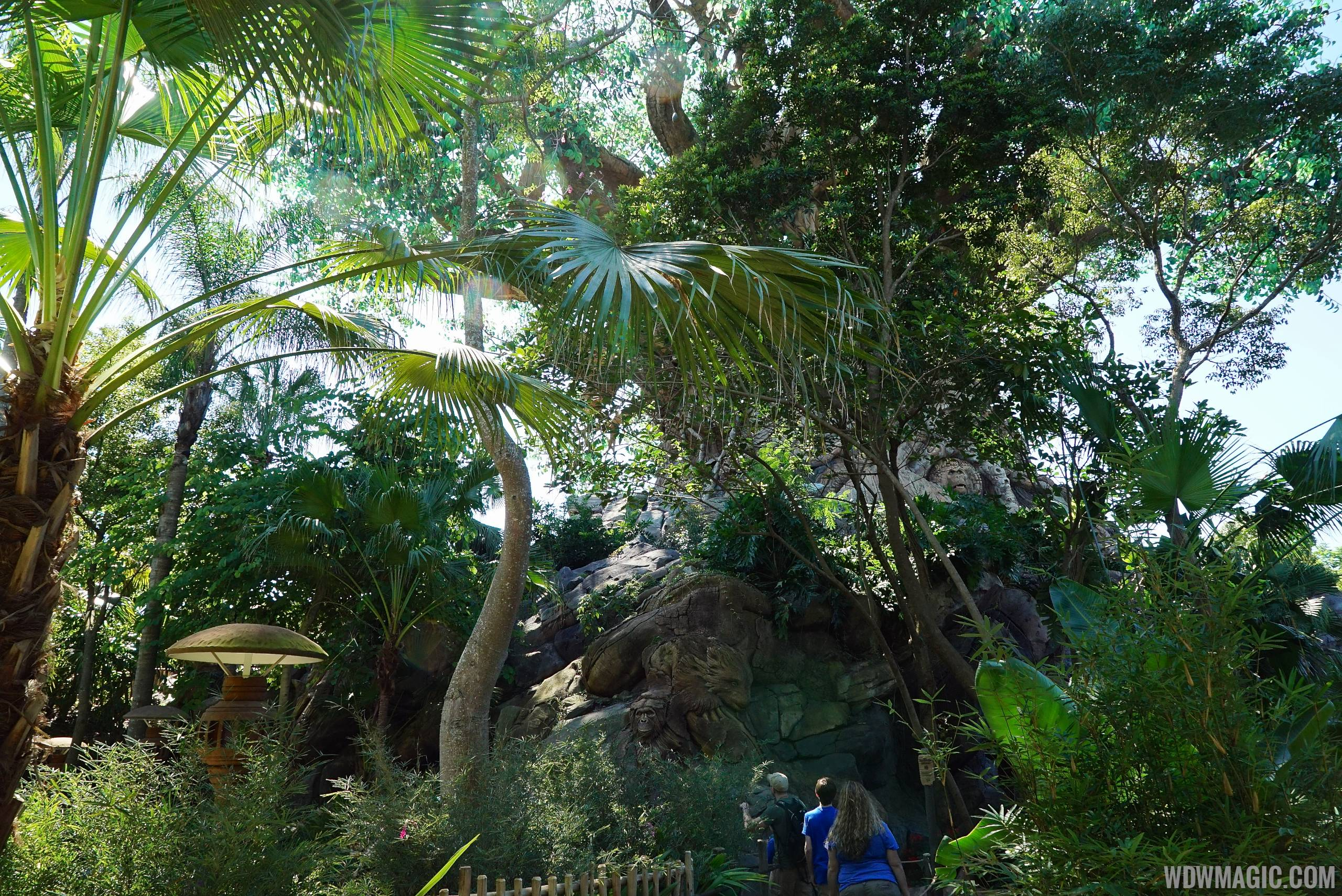 No more overhead nets at Tree of Life