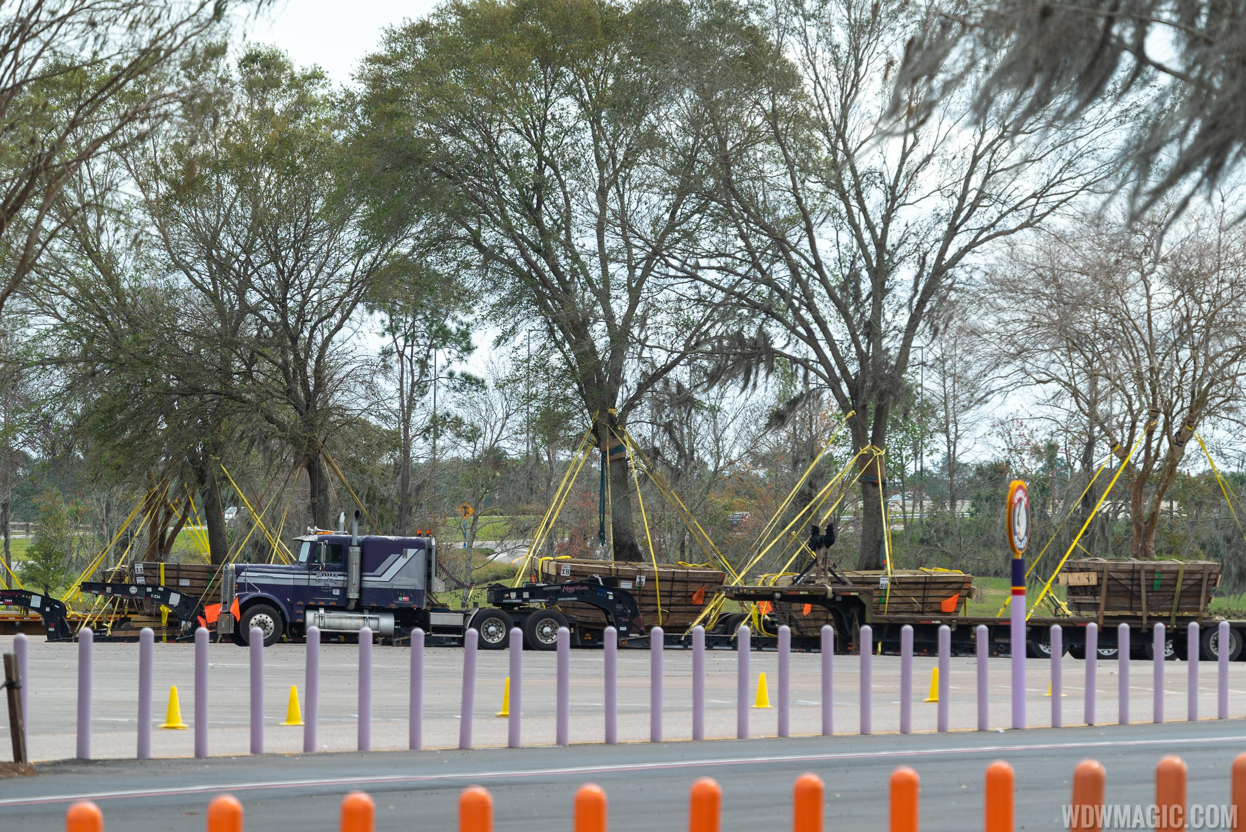 Oak Tree relocation from the TTC