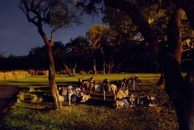 Savor the Savanna: Evening Safari Experience