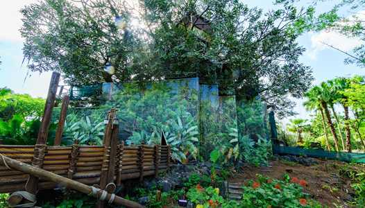 Swiss Family Robinson Tree house refurbishment extended