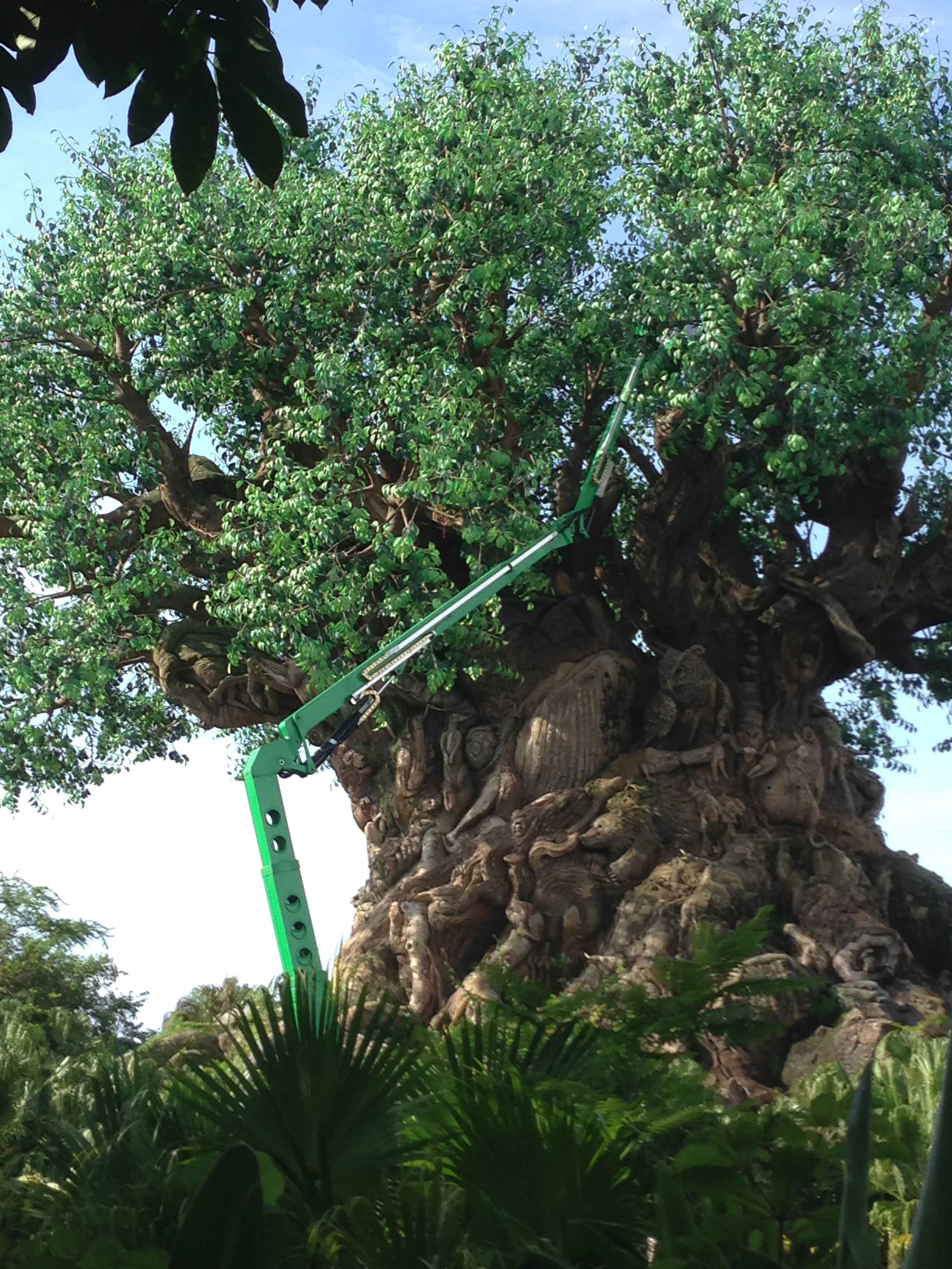 Tree of Life refurbishment