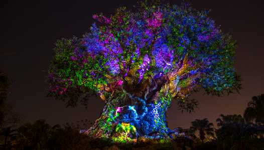 VIDEO - The Tree of Life Awakens at Disney's Animal Kingdom