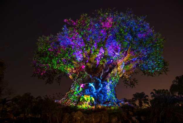 The Tree of Life Awakens