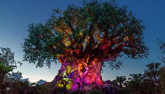VIDEO - New Awakenings come to the Tree of Life for the holidays
