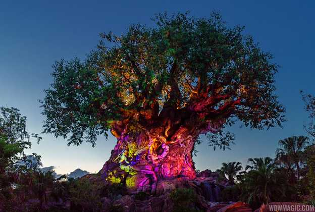 Tree of Life Awakens