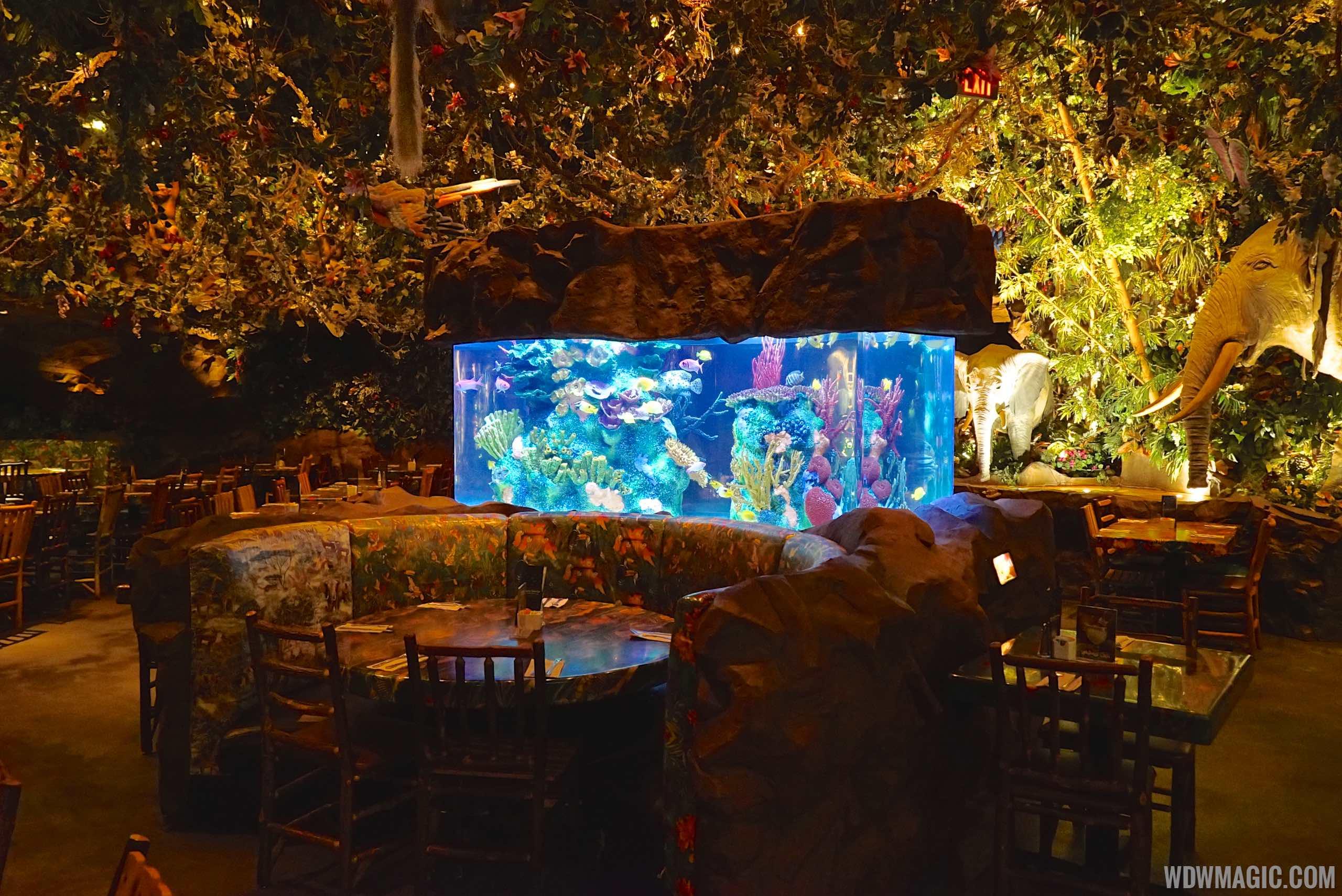 Rainforest Cafe Disney's Animal Kingdom on science cafe, halloween cafe, corner bakery cafe, jungle cafe, zoo cafe, aquarium cafe, blue cafe, vegas cafe, sunrise cafe, sandella's flatbread cafe, hardrock cafe, animal cafe, first hard rock cafe, london cafe, new hard rock cafe, disney cafe, t-rex cafe, island cafe, space cafe, urbane cafe,