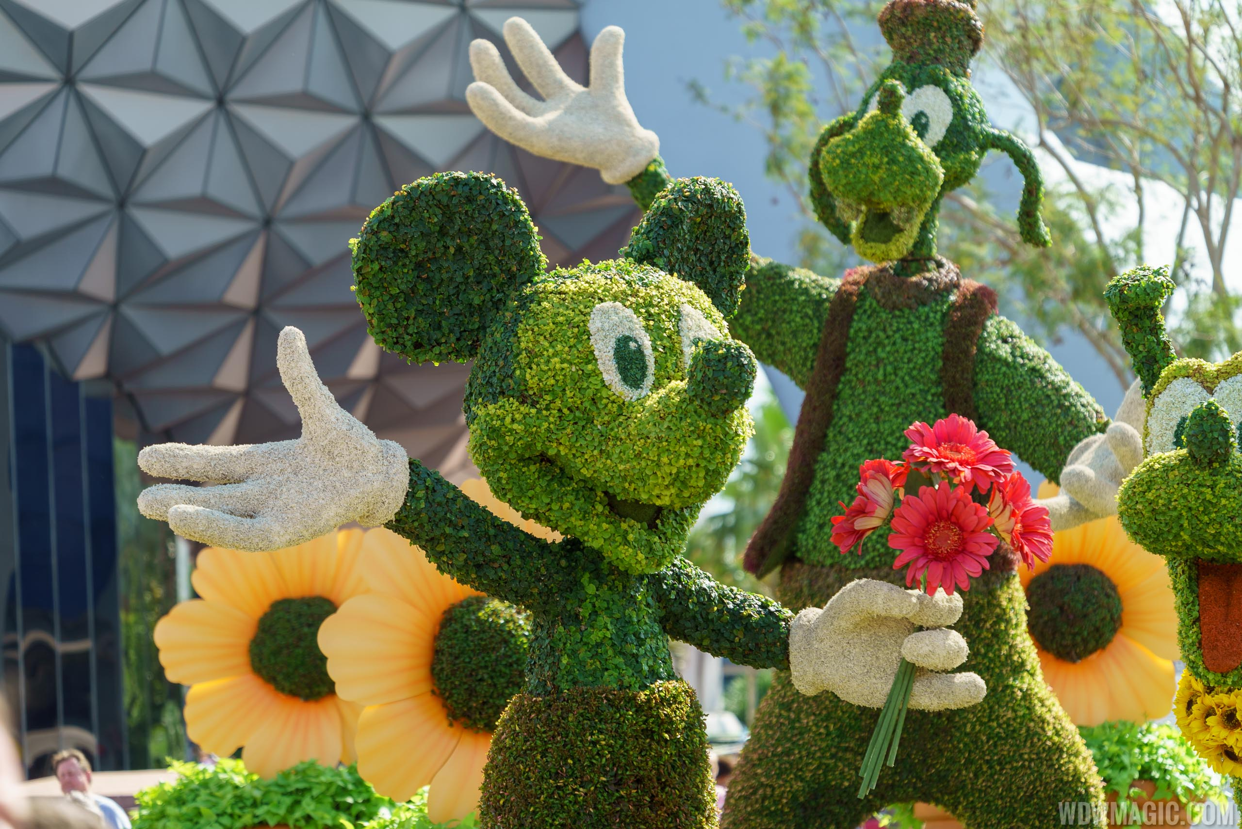 Mickey Mouse is one of the main entrance topiary