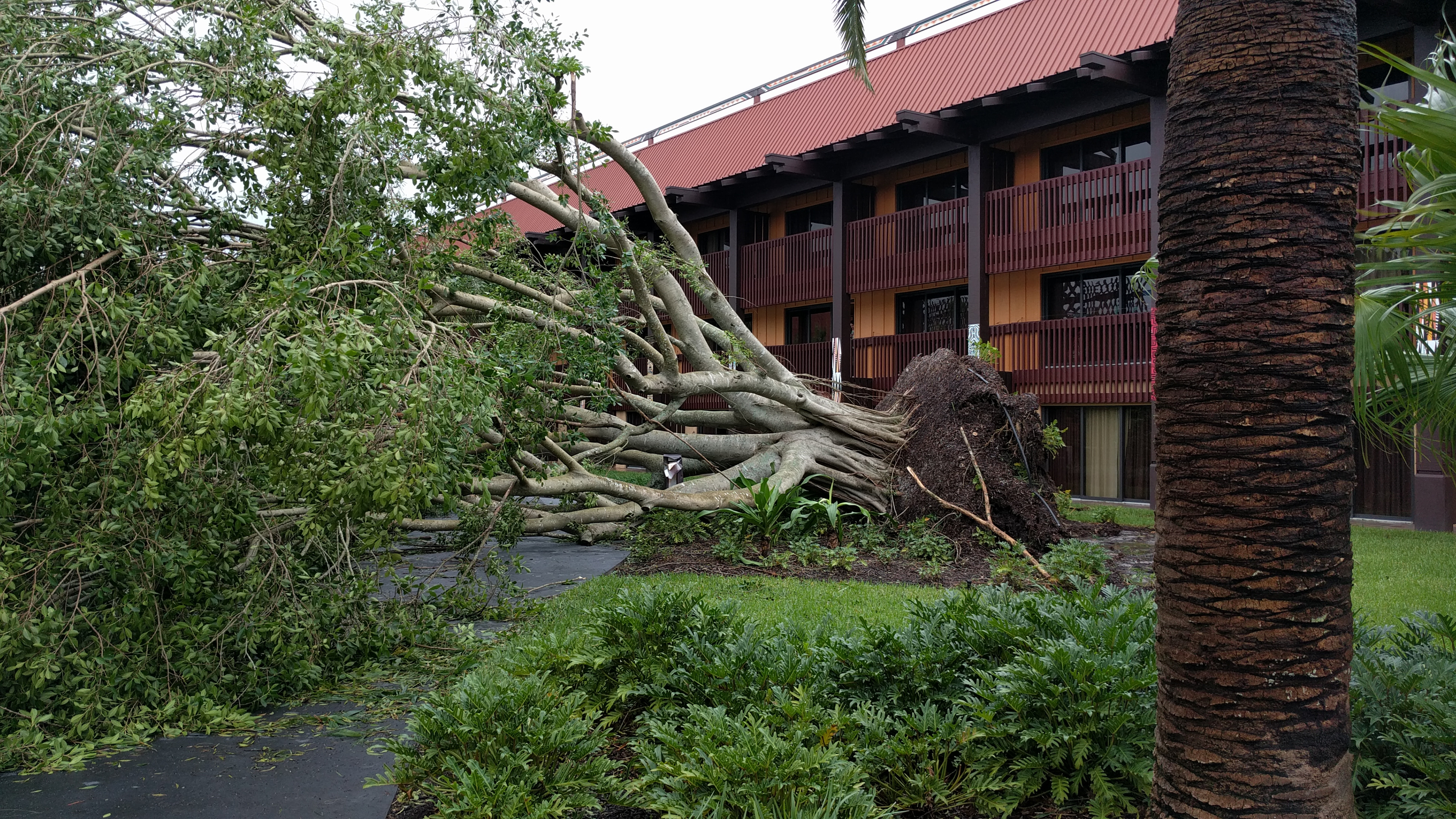 Hurricane Irma damage at Disney's Polynesian Resort