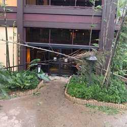 Hurricane Irma damage at Disney's Polynesian Resort