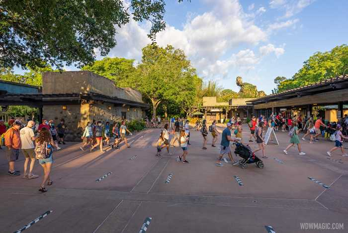 Disney's Animal Kingdom first day of no masks outdoors
