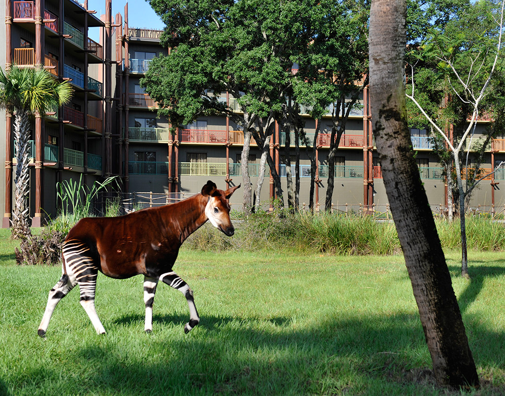 Kidani Village Pembe Savanna featuring Okapi
