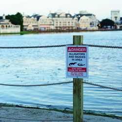 Temporary fencing and updated signs on Disney World beaches