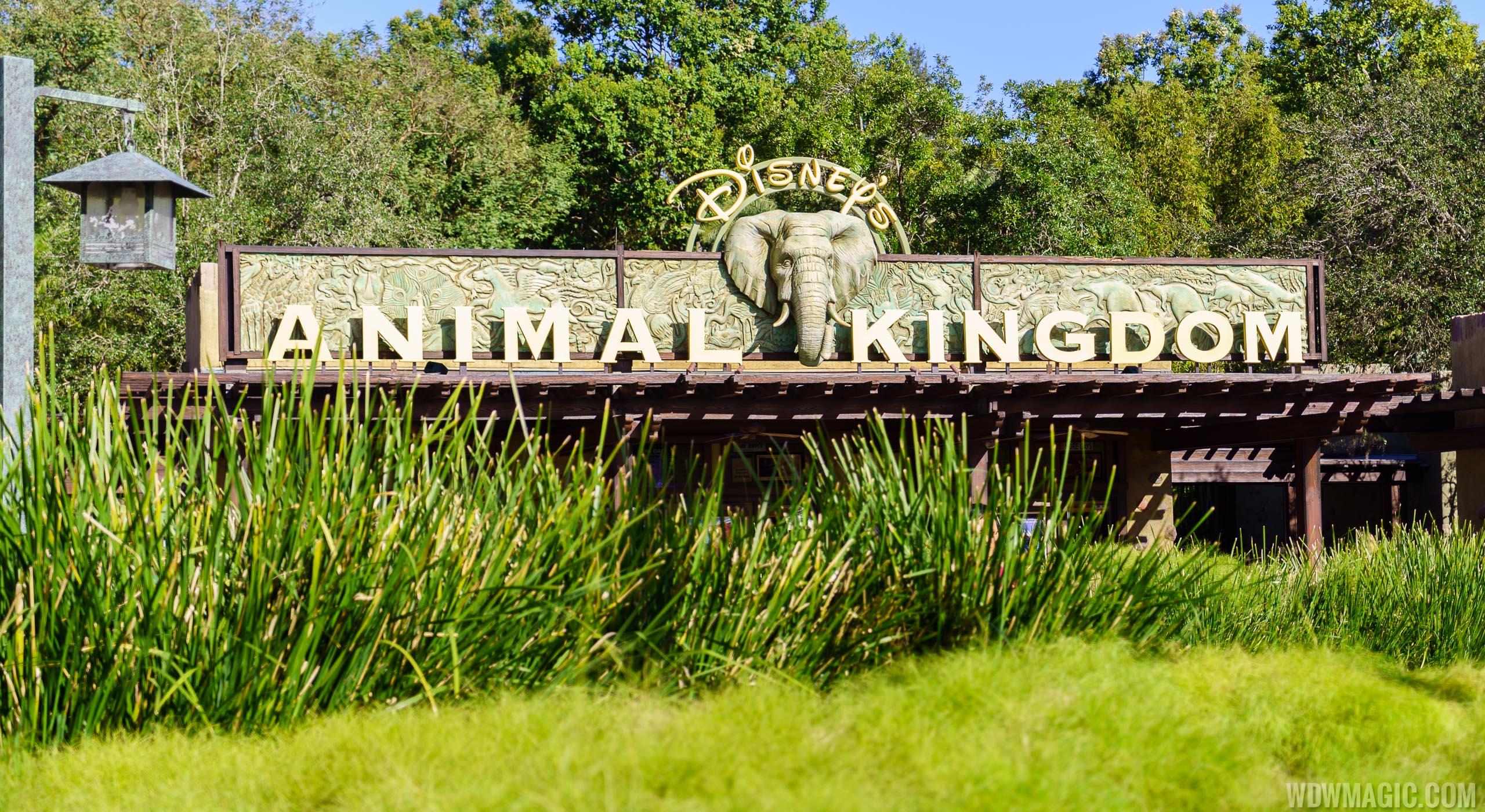 Welcome to Disney's Animal Kingdom